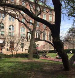 Spring Sprang Sprung: Bwog's Favorite On-Campus Outdoor Locales