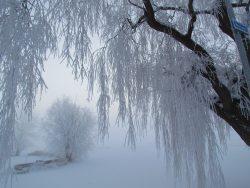 Bwoglines: It's Cold